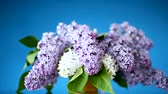 ваш : spring blooming bouquet of lilac in a vase
