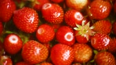 background of organic natural fresh ripe strawberry Vídeos