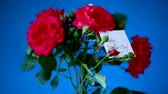 bouquet of beautiful red roses on a blue
