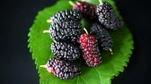 suculento : Mulberry berry with leaf isolated on black background Stock Footage