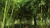 huzur : Fresh green at bamboo forest