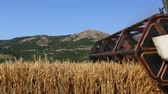 machinery : Combine harvester gathering wheat crop. Stock Footage