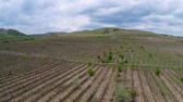 vinificação : Beautiful vineyard landscape with dramatic sky aerial view