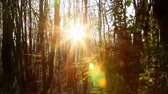 buche : Herbst in den Wald. Steady Material ... Stock Footage