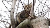 cattish : Cat resting on a tree branch Stock Footage
