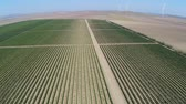vinificação : Beautiful vineyards landscape with wind turbines in the background, aerial view