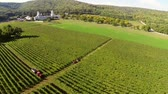 vinificação : Beautiful vineyards landscape with monastery in the background, aerial view