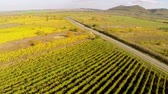 vinificação : Country road through the vineyards in fall colors, aerial view