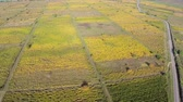 vinificação : Beautiful vineyards landscape in fall colors, aerial view