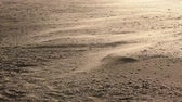 deserted : Wind blown sand on a deserted beach Stock Footage