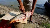 danube delta : Fisherman cleaning and cutting fresh fish on the shore of the danube