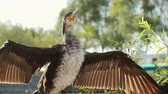 danube delta : Cormorant drying in the sun