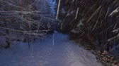 ice situation : Heavy snowing in the night forest. Snow blizzard in winter night.