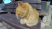 Old ginger cat sleeping on wooden bench.
