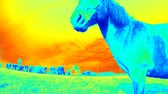Horse with industrial thermal camera scanner. Detecting of body heat loss