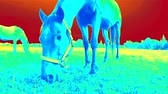Temperature detection in nature. Animal Heat Losing Outside. Using Fake Infrared Thermal Camera