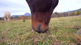 Horse eating grass. Filmati Stock