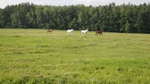 pasturage : Four horses walking in a line on a green pasture