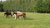 pasturage : Horses looking to each other and walking together