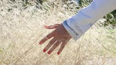 brim : Hand of a girl walking through gentle plants. Slowmotion Stock Footage