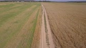 cultivating : Aerial: flying above dirty road between agricultural fields Stock Footage