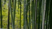 forest : wind shaking bamboo,quiet atmosphere.