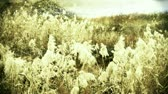 forest : river reeds in wind. Stock Footage