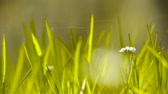 playful : Beautiful wild flowers in grass,Cobwebs spiders. Stock Footage