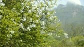 health : Flowers sway in wind.Bees flying in flowers & mountain hill. Stock Footage