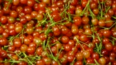 health : Fresh cherries. Stock Footage