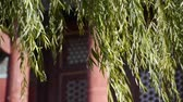 cantaria : willow shaking in wind at the Forbidden City.Chinese ancient buildings & red pillars.