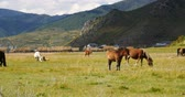 shangrila : horse grazing on the grassland,shangri-la yunnan,china.