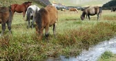 united states : horse grazing on the grassland,shangri-la yunnan,china.