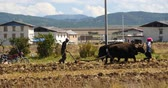 shangrila : tibetan people use strong yak Arable land in shangrila yunnan,china.