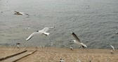 aves marinhas : 4k Flock of seagulls fly over ocean and shore in daytime. Stock Footage