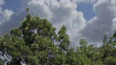 облака : Branches move at real time while clouds have a time lapse rush