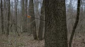 longbow : Man firing arrow into tree in forest