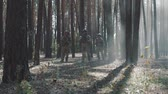 troops : American soldiers patrol the perimeter in the forest