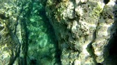 waterplant : Underwater at the sardinian coast in the clear mediterranean sea