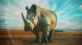A slow motion video with a rhinoceros in the wild and dramatic skies above.