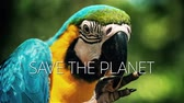 macaw parrot : A slow motion video with a blue and yellow macaw parrot and save the planet caption Stock Footage