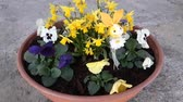 otimista : Easter April decorations outdoor with bunny and flowers daffodils sprays