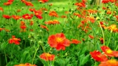 colorful : Beautiful flowers in the garden in the day rack focus