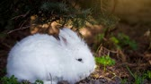 размыто : Video of white rabbit outdoors