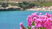 view of crowded Balai beach, in Sardinia, from behind flowers with change focus point 動画素材
