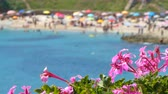 гало : view of crowded Balai beach, in Sardinia, from behind flowers with change focus point Стоковые видеозаписи