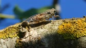 cicada on tree branch in sunny day