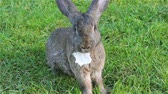 pet : rabbit eats cabbage