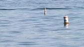 знак : Two Buoys Floating. a couple of buoys float out in a lake. one of them has the speed as 5mph Стоковые видеозаписи