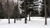 неузнаваемый : Walking Dogs in a Winter Scene. people walk there dogs from the left of the screen to the right. unrecognizable people.